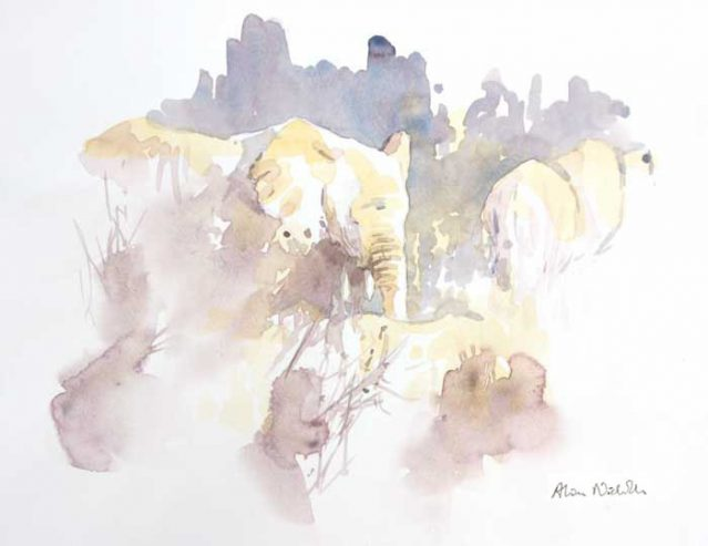 Elephants Browsing in the Bush, watercolor Field Sketch by Alison Nicholls ©2016