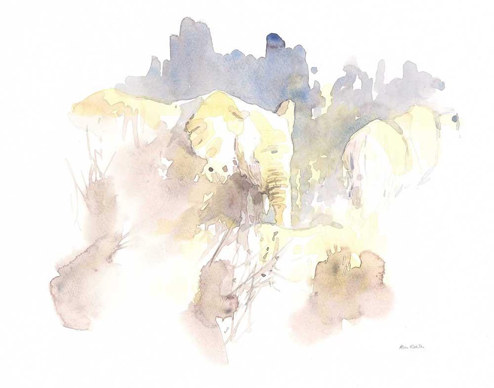 Elephants, watercolor field sketch by Alison Nicholls