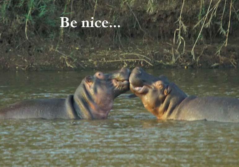 hippos by Nigel Nicholls