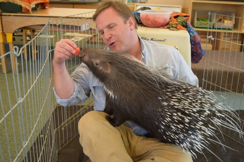 Quilliam the African crested porcupine with Chris Evers of Animal Embassy