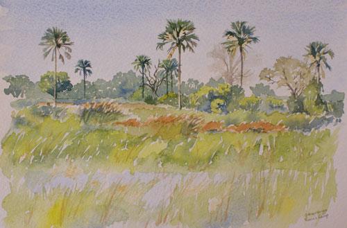 Okavango Delta by Alison Nicholls