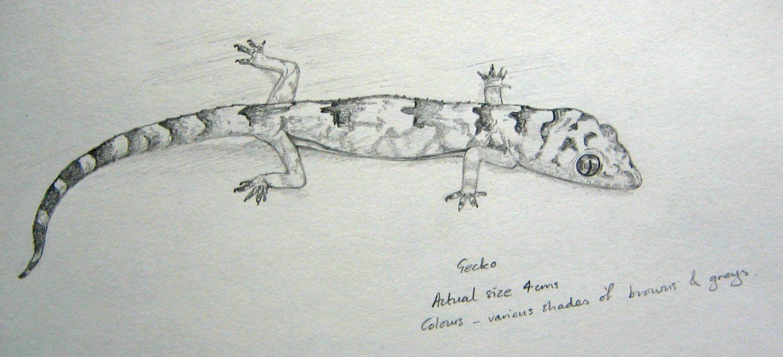 Gecko by Alison Nicholls